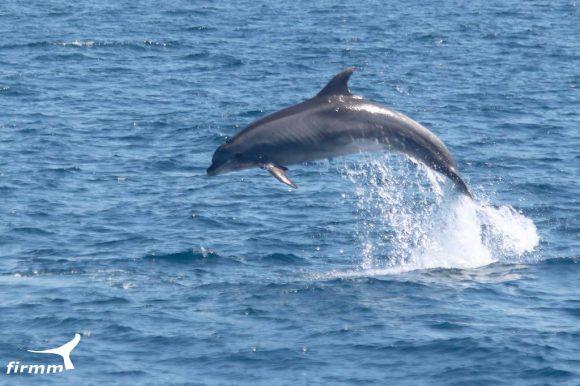 Excursión en barco para observar ballenas y delfines