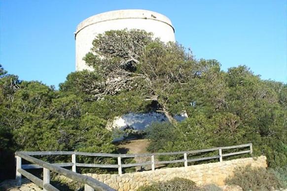 Sendero Torre del Tajo y observación ornitológica